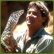 Tribute To Steve Irwin